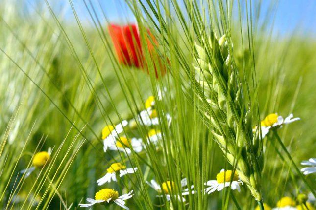 Erntedank 2017 bietet Anlass für gesellschaftliche Reflexion über die heutige Landwirtschaft