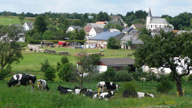 """Landvolkbewegung für Fortführung und Stärkung von """"Zwei-Säulen-Modell"""" der EU-Agrarpolitik auch nach 2020"""