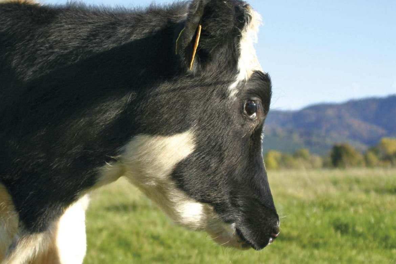 Ethik in der Nutztierhaltung