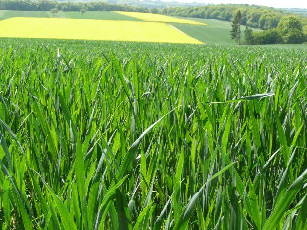 Zukunftsfähige Produktionsweisen notwendig KLB - Leitbild Landwirtschaft aktualisiert