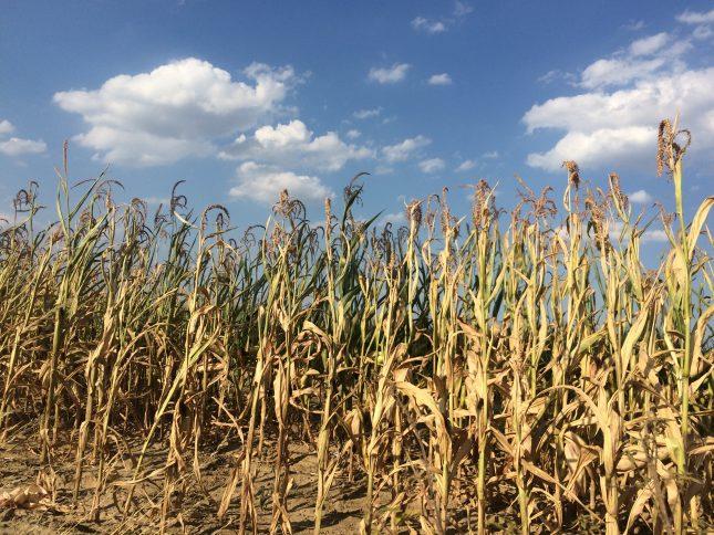 Pressemeldung der KLB zum Thema Dürrehilfen für betroffene Landwirte