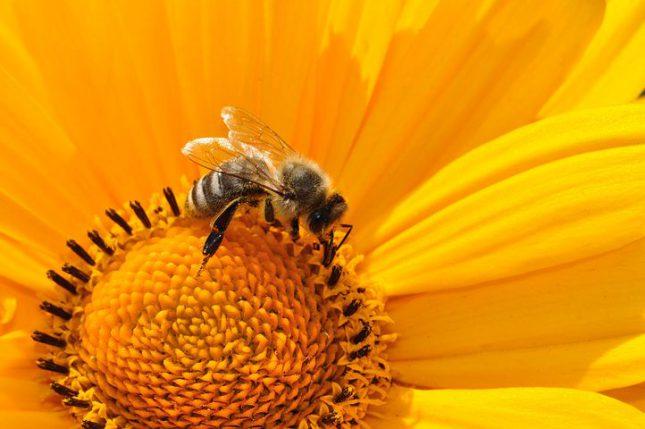 """""""Rettet die Bienen"""""""