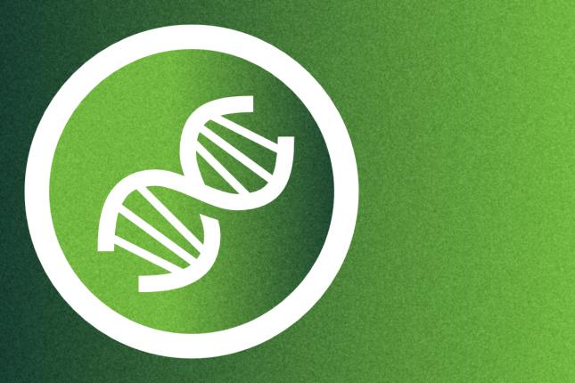 Wir brauchen keine gentechnisch veränderte Stärkekartoffel