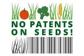 PM Der KLB zu – Patente auf Saatgut: Präsident des EPA beendete unbemerkt das Moratorium